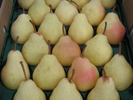 packed Bartlett pears